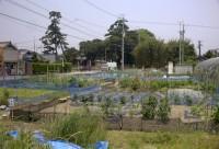 市民農業写真